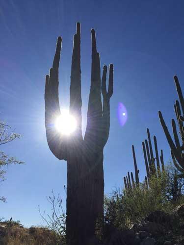 Tucson---Cactus