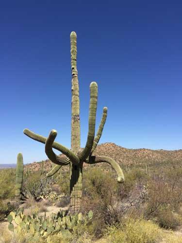 Tucson---Crazy-Cactus