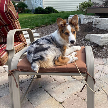 Digit sitting on an outdoor chair
